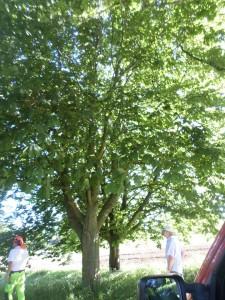 Sidste syn på træerne. Foto: Britta Timm Knudsen