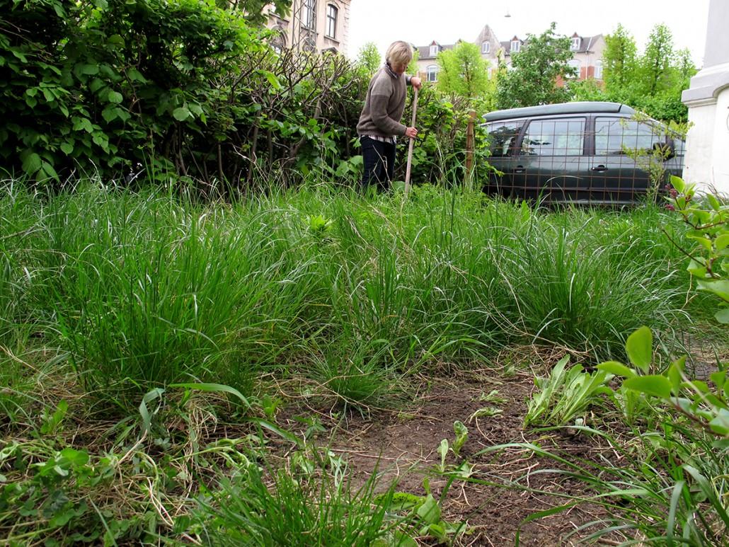 Græsset rives sammen