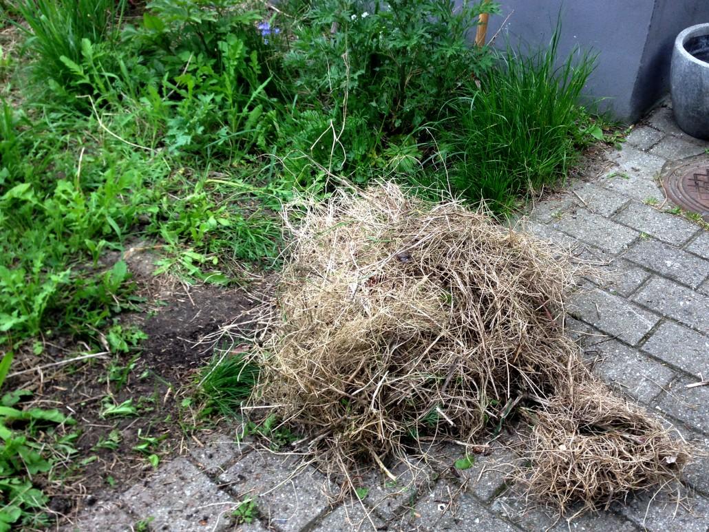 Græsset fjernes og smides på komposten