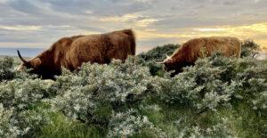 Stor natur med store dyr